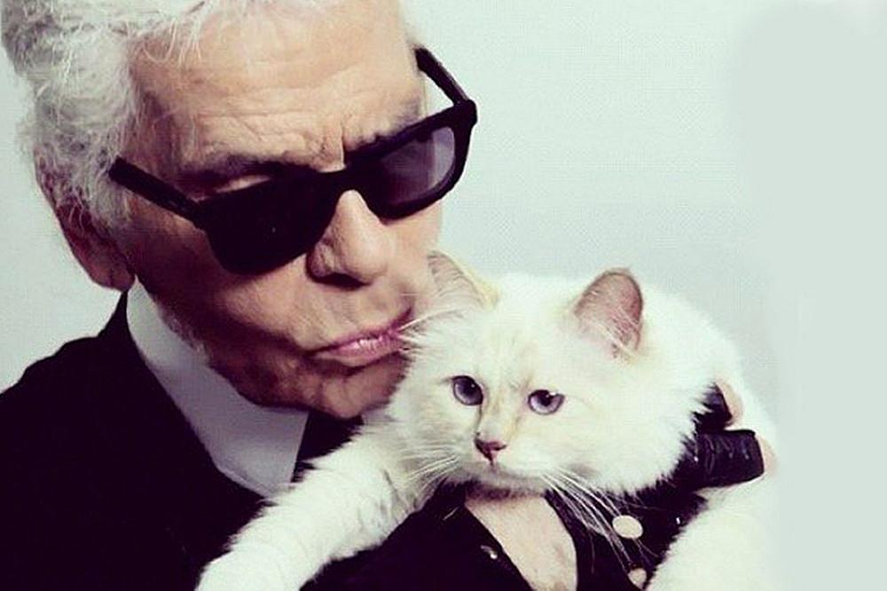 Choupette - Karl Lagerfeld's cat
